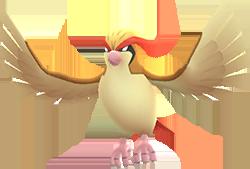 Pidgeot